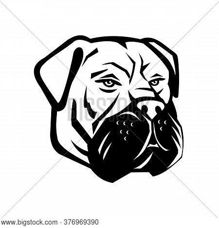 Black And White Mascot Illustration Of Head Of Bullmastiff, A Large-sized Breed Of Domestic Dog, Wit