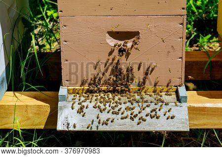 Close Up Of Entrance Of Bees Into A Working Flying Near The Hive A Wooden Colored Hive.