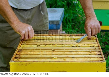 Apiculture Beekeeping Beekeeper Works With Bees Near Hives Taking Out Frames With Honeycombs For Ins