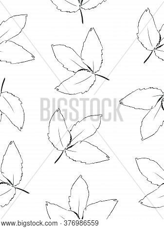 Doodle Drawing Style Image Of Black And White Beech Leaf Seamless Background, Vector Illustration