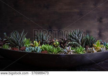 Perle Von Nurnberg Plant In A Gift Composition