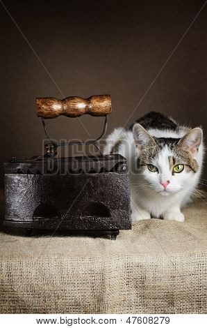 Cat And Iron
