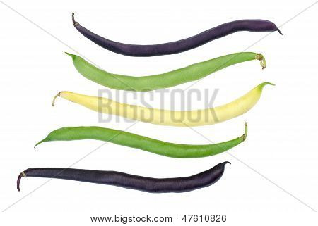 Purple, green and yellow Wax Snap Beans