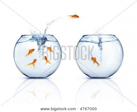 A goldfishes jumping out of fishbowl to other fishbowl. White background. poster
