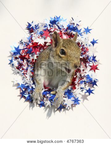 Happy July Squirrel