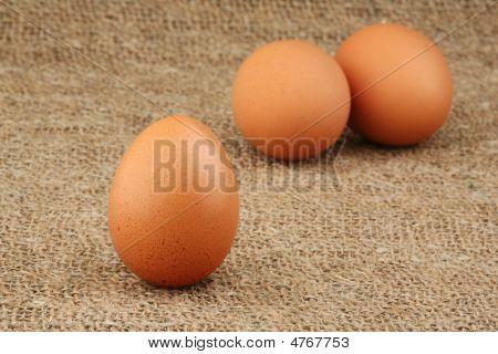 New-laid Eggs