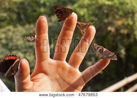 Butterflies In Hand