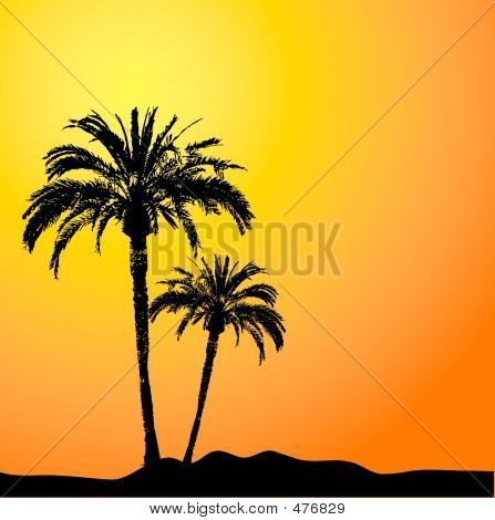 palm trees against a sunset sky poster