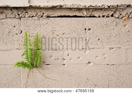Plant Growing From Cement Wall