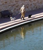 An elderly man walking three dogs along an urban river walk. poster