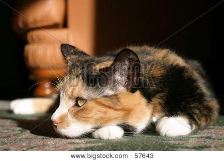 Relaxing Cat...
