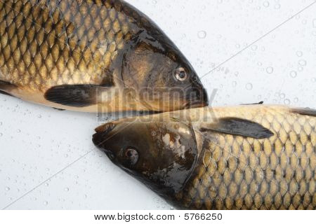 Closeup of two fresh raw carps lying on silver metal background with water drops poster