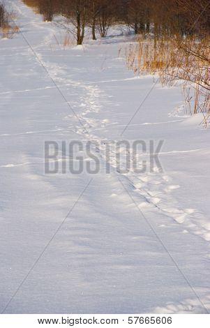 Spoor on snowy field