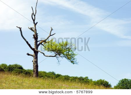 Lonely Half Dried Tree