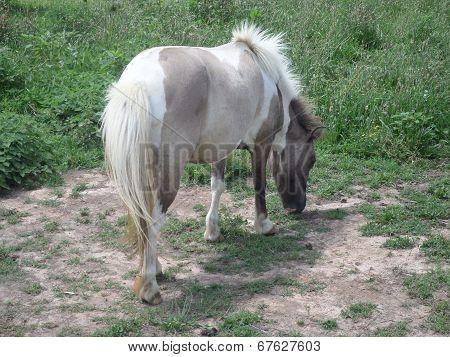 White and Grey Pony
