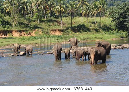 Elephants on a watering place