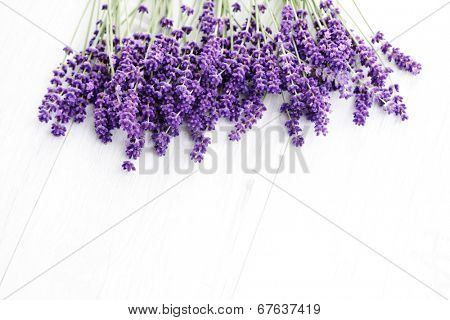 bunch of lavande on white background - flowers and plants poster