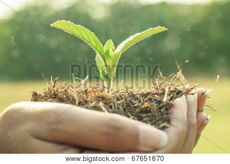 Plant Is In Hands