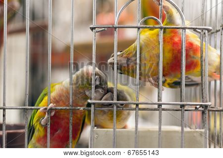 Parrot want to escape, shot at bird street in Hong Kong, Asia. poster