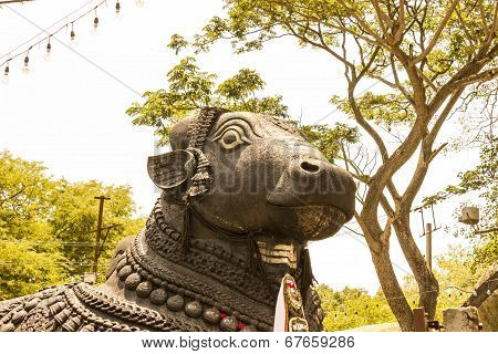 closeup of face of Nandi (the sacred bull) Lord Shiva's vehicle poster