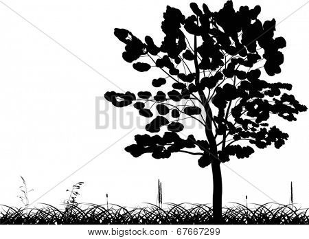 illustration with broad-leaved tree silhouette in grass isolated on white background