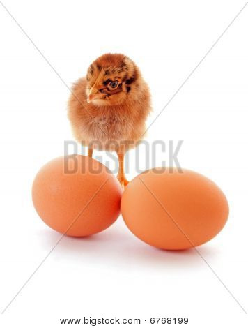 A baby chick over a white background poster