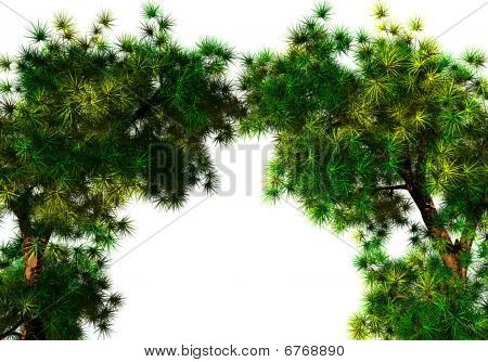 Arch of the trees
