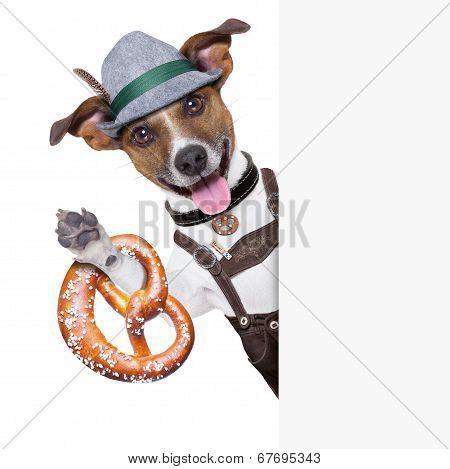 Oktoberfest Dog