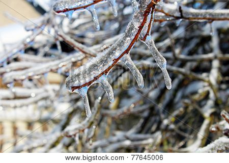 Branch With Ice
