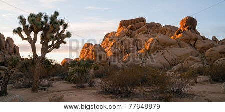 Joshua Tree Sunrise Cloud Landscape California National Park