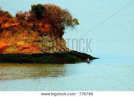 Seagull on Rat Island