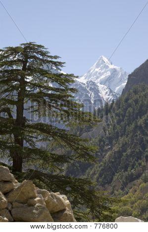 Himalayan fir and mountain