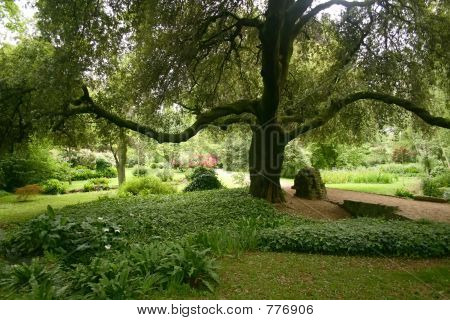 The Reaching Tree