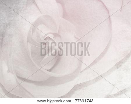 Soft rose pattern - white pink flower background