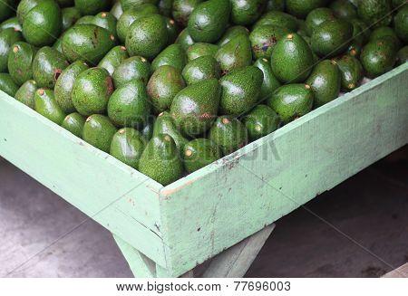 Avocado At The Market
