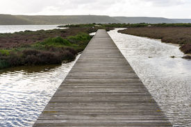 Bridge In The Pond