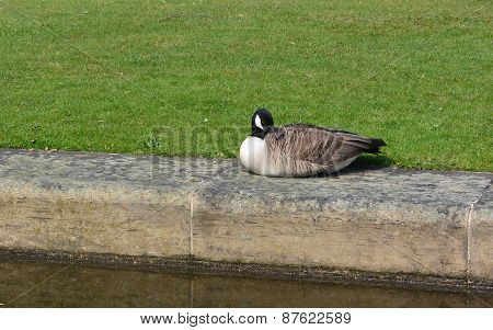Wildlife by the Canal