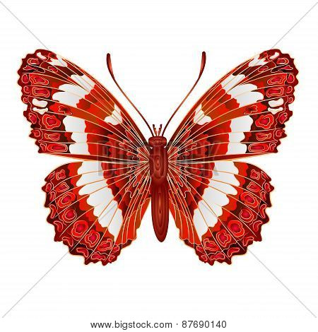 Butterfly Limenitis Camilla Vector
