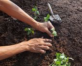 people planting young tree on dirt soil with gardening tool use for people activities and save nature earth for future poster