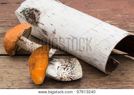 Wild Mushrooms (leccinum Aurantiacum) And Birch Bark