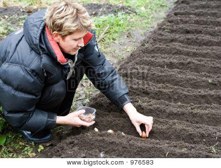Woman Plants Tulips
