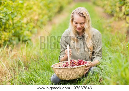 Sitting blonde winegrower looking at a red grapes basket