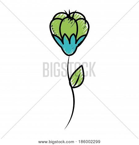beautiful flower with petals botany plant, vector illustration
