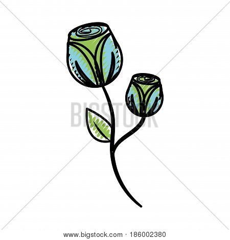 beautiful flowers with petals botany plant, vector illustration