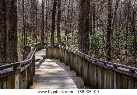 Walking trail thru natural wood setting.  Wood boardwalk path through forest.  Explore and enjoy recreational walk or hike through the woods.