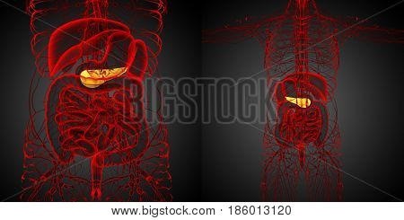 3D Rendering Medical Illustration Of The  Pancrease
