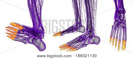 3D Rendering Illustration Of The Human Phalanges Foot
