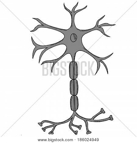 Nerve Cell Neuron neuron in sketch style. isolated on white background. Ink hand drawn illustration.