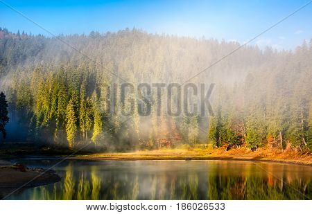 Mountain Lake On Foggy Morning In Spruce Forest