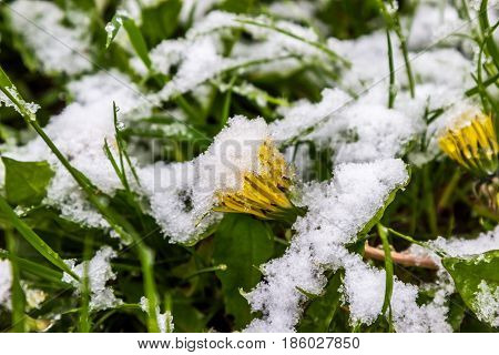 11 May 2017 Belarus snow in spring